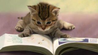 本嫌いな子供の心理。実際、僕は本が大嫌いでした。その理由とは・・・?本を好きになってもらう方法。