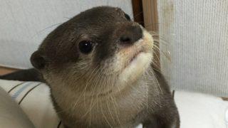 人間以外で「嘘」をつく動物はいるのだろうか?
