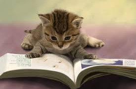 本の読み方。