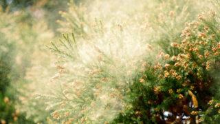薬を使わず花粉症の対策と克服 ~ 僕がやっていることは誰でもできる事。