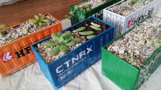 【多肉植物】育て方も分からず取り掛かる箱庭作り。No.8