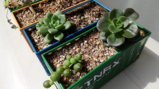 【多肉植物】育て方も分からず取り掛かる箱庭作り。No.9