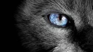 私には人を見る目がない。ならば、その能力を欲しがらない。